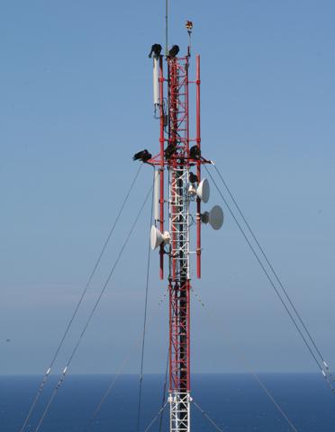 Sesta-Transmitter-Pop-DR-2008
